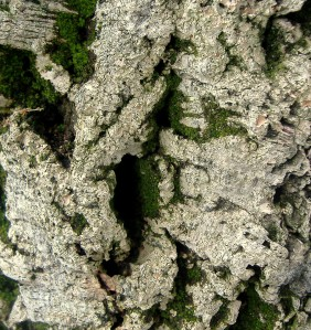 I thought the bark on this tree looked cool, too---was digging the moss.